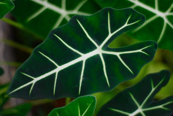 Because this leaf is beautiful